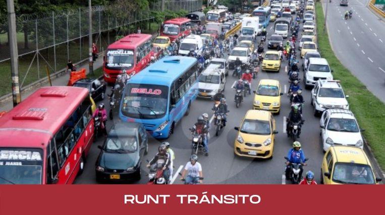 runt transito